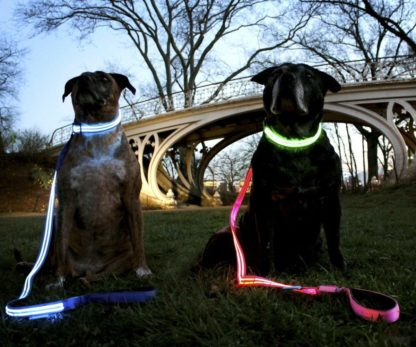dogs with led collars and leash